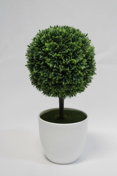 little tree small white pot