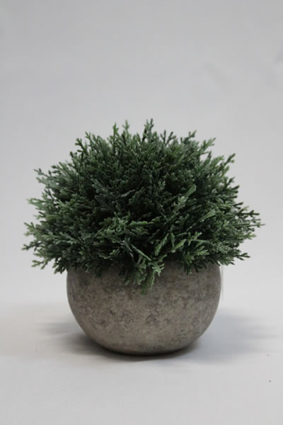 moss in stone type pot