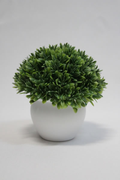small algae round pot