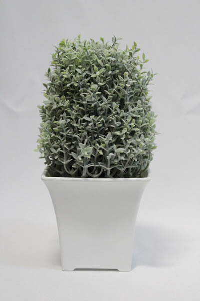 eucaliptus tall pot