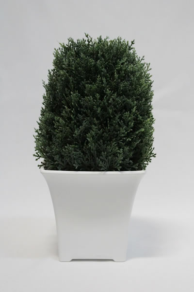 tall green pine pot